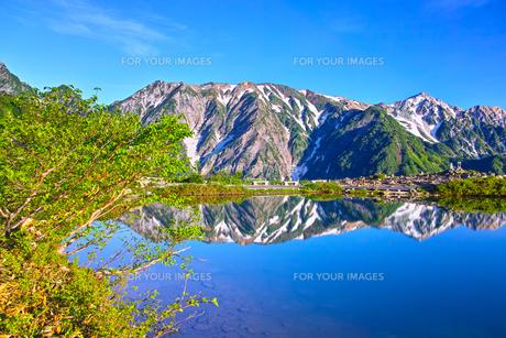 朝日を浴びた新緑の八方池と白馬三山の写真素材 [FYI01194607]