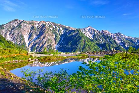 朝日を浴びた新緑の八方池と白馬三山の写真素材 [FYI01194608]