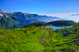 八方尾根から見た、朝日を浴びた新緑の八方池の写真素材 [FYI01194616]