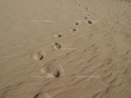 砂漠の足跡の写真素材 [FYI01194640]