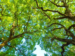 新緑の樹木の写真素材 [FYI01194780]