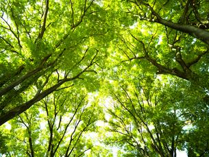 新緑の樹木の写真素材 [FYI01194785]