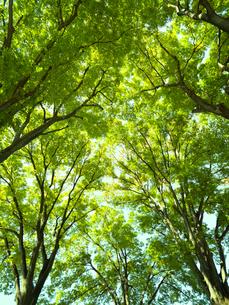 新緑の樹木の写真素材 [FYI01194786]