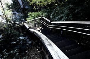 緑に囲まれた公園の長い階段の写真素材 [FYI01194826]