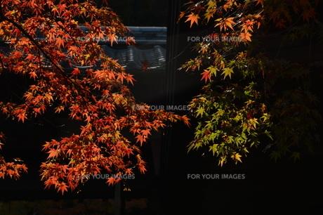 秋の光明禅寺 / 福岡県太宰府市の写真素材 [FYI01195009]