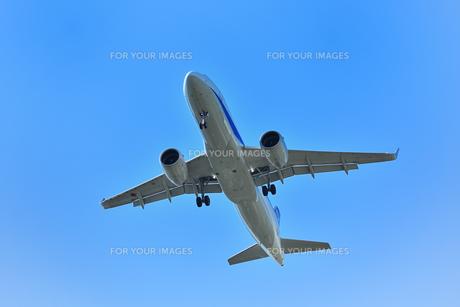 着陸中の旅客機の写真素材 [FYI01195200]