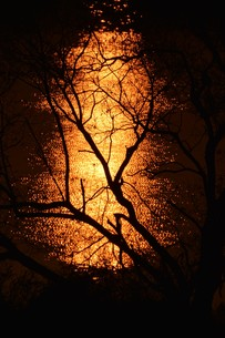 日本の風景 / 陽を浴びて炎のごとく燃ゆる河 / 九州 筑後川の写真素材 [FYI01195539]