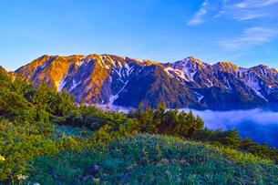 八方尾根から見た朝日を浴びた白馬三山の写真素材 [FYI01195640]