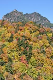 紅葉の鶏冠山の写真素材 [FYI01196014]