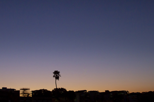夕暮れのurbanlandscapeとヤシの木の写真素材 [FYI01196028]