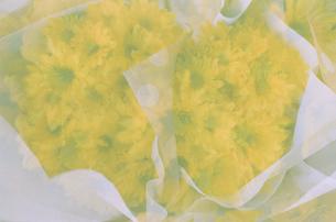 黄色のガーベラの花束の写真素材 [FYI01196032]