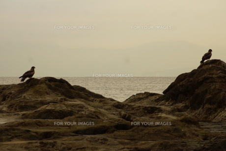 夕暮れの江の島(岩屋)の写真素材 [FYI01196061]