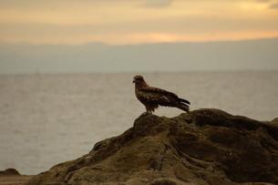 夕暮れの江の島(岩屋)の写真素材 [FYI01196062]