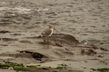 夕暮れの江の島(岩屋)の写真素材 [FYI01196071]