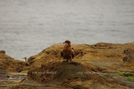 夕暮れの江の島(岩屋)の写真素材 [FYI01196073]