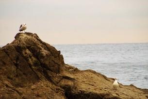 夕暮れの江の島(岩屋)の写真素材 [FYI01196074]