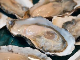 生牡蠣の写真素材 [FYI01196194]