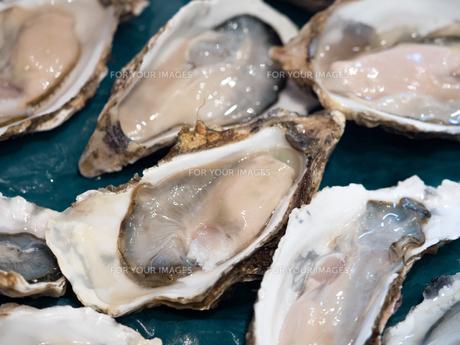 生牡蠣の写真素材 [FYI01196195]