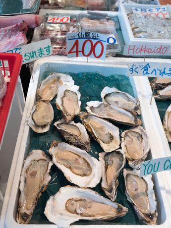 生牡蠣の写真素材 [FYI01196197]