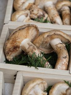 店頭に並んだ松茸の写真素材 [FYI01196243]