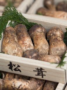 店頭に並んだ松茸の写真素材 [FYI01196244]