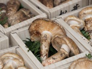店頭に並んだ松茸の写真素材 [FYI01196247]