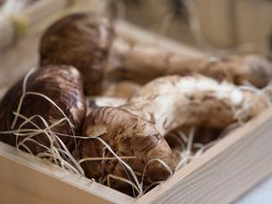 店頭に並んだ松茸の写真素材 [FYI01196249]