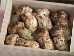 店頭に並んだ松茸の写真素材 [FYI01196250]