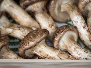 店頭に並んだ松茸の写真素材 [FYI01196254]