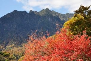 紅葉の西沢渓谷より鶏冠山の写真素材 [FYI01196298]