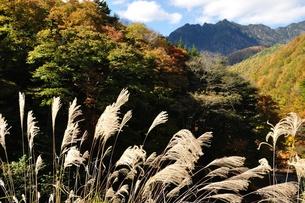 紅葉の西沢渓谷より鶏冠山の写真素材 [FYI01196299]
