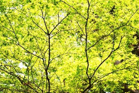 新緑・涼感 / 盛夏のメッセージカード素材の写真素材 [FYI01196429]