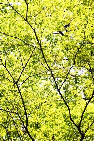 新緑・涼感 / 盛夏のメッセージカード素材の写真素材 [FYI01196430]