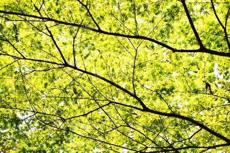 新緑・涼感 / 盛夏のメッセージカード素材の写真素材 [FYI01196431]