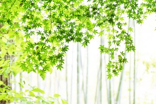 新緑・涼感 / 盛夏のメッセージカード素材の写真素材 [FYI01196432]