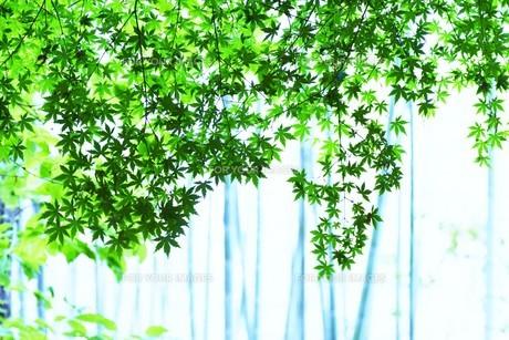 新緑・涼感 / 盛夏のメッセージカード素材の写真素材 [FYI01196433]