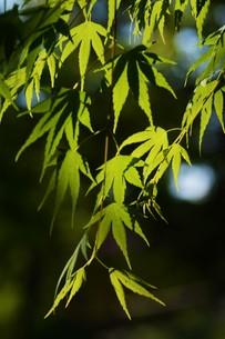 新緑・涼感 / 盛夏のメッセージカード素材の写真素材 [FYI01196434]