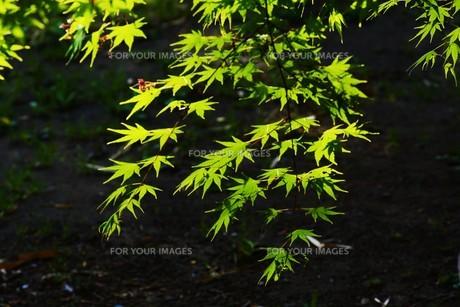 新緑・涼感 / 盛夏のメッセージカード素材の写真素材 [FYI01196435]