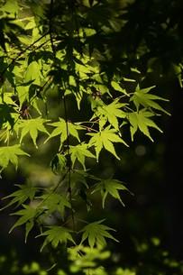 新緑・涼感 / 盛夏のメッセージカード素材の写真素材 [FYI01196436]