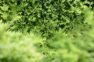 新緑・涼感 / 盛夏のメッセージカード素材の写真素材 [FYI01196437]