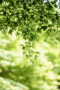 新緑・涼感 / 盛夏のメッセージカード素材の写真素材 [FYI01196438]