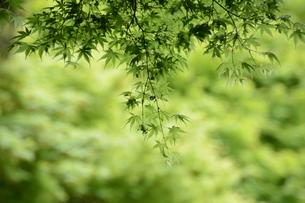 新緑・涼感 / 盛夏のメッセージカード素材の写真素材 [FYI01196439]