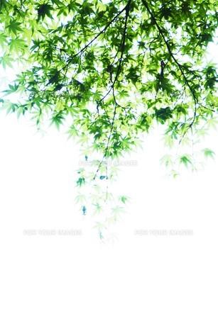 新緑・涼感 / 盛夏のメッセージカード素材の写真素材 [FYI01196440]