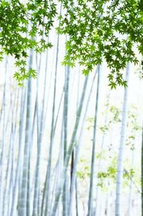 新緑・涼感 / 盛夏のメッセージカード素材の写真素材 [FYI01196445]