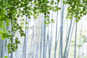 新緑・涼感 / 盛夏のメッセージカード素材の写真素材 [FYI01196446]