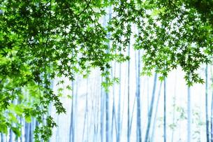 新緑・涼感 / 盛夏のメッセージカード素材の写真素材 [FYI01196447]