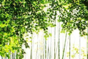 新緑・涼感 / 盛夏のメッセージカード素材の写真素材 [FYI01196449]