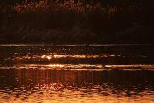 日本の風景・朝日に輝く 筑後川シルエット / 九州福岡県久留米市筑後川のイラスト素材 [FYI01196460]