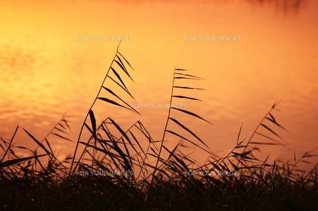 日本の風景・朝日に輝く 筑後川シルエット / 九州福岡県久留米市筑後川のイラスト素材 [FYI01196465]