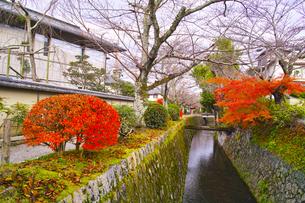 晩秋の京都、朝の哲学の道からみた景色の写真素材 [FYI01196509]
